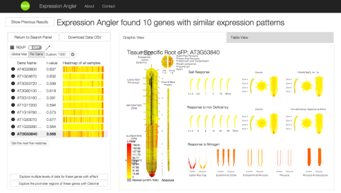 Screen capture of the Expression Angler visualization tool